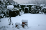 snow back garden