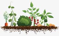 veg-vegetables-clipart-8-clipart-station_650-400